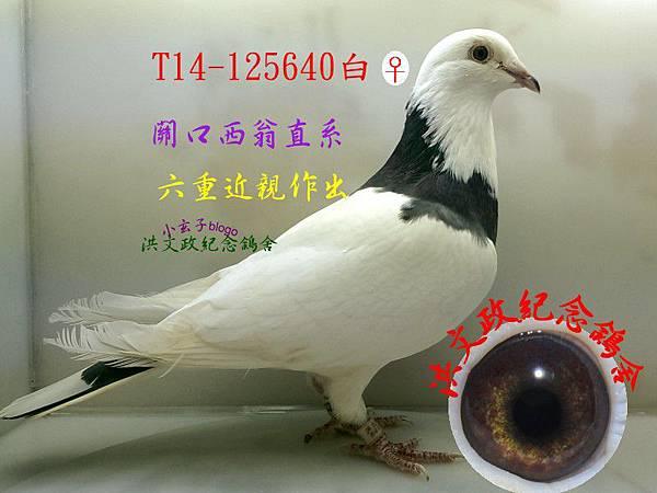 125640(1)