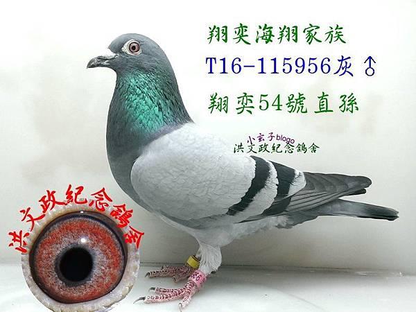115956