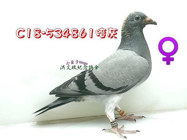 534861 (2)
