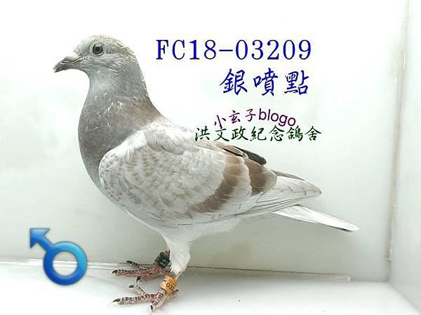 03209 (1)