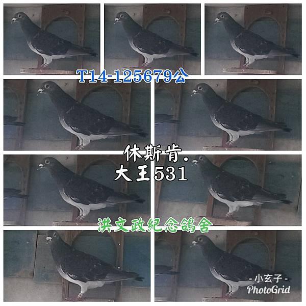 PhotoGridLite_1534296030129
