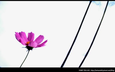 IMAG0681-1.jpg