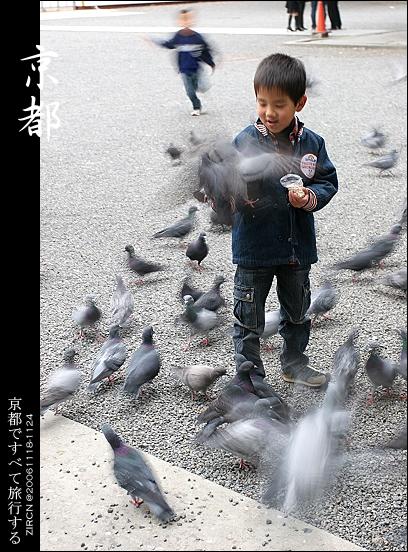 東本願寺裡被鴿子淹沒的小孩