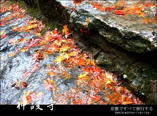 階梯上的楓紅落葉