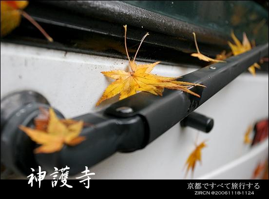 車窗前的落葉