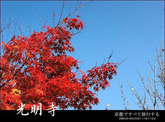 超開心的藍天楓紅