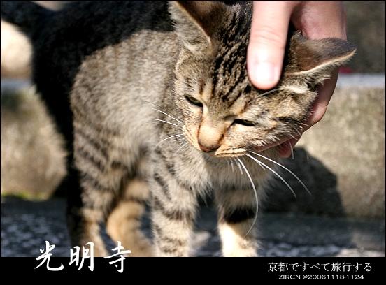 超乖的小貓