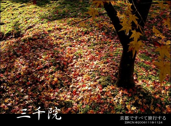 滿滿的美麗落葉