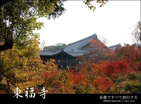 見頃的東福寺