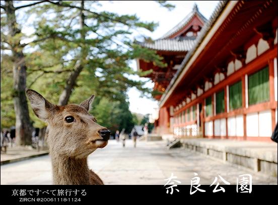 東大寺外的鹿