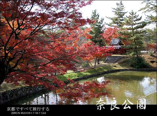 超漂亮的奈良公園