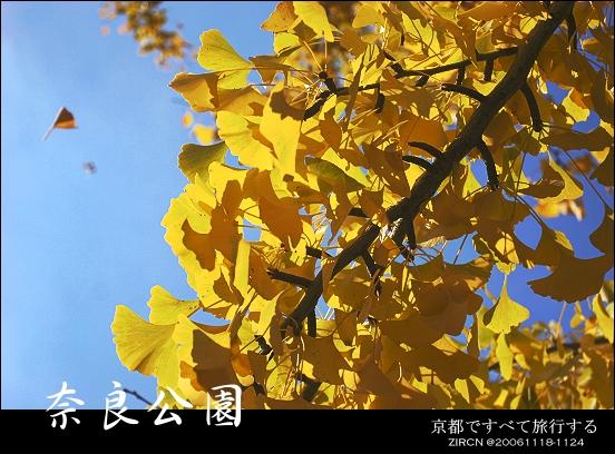 正好起風...銀杏葉都飄了下來^^