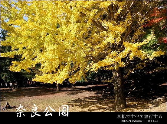 奈良公園一隅