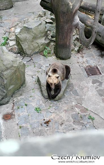 城堡外圍的棕熊
