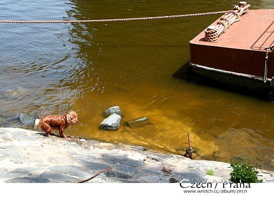 這位仁兄超興奮地跳入河裡玩水^^