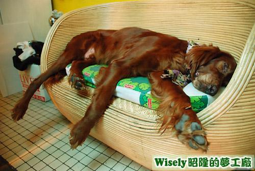 Model睡在籐椅