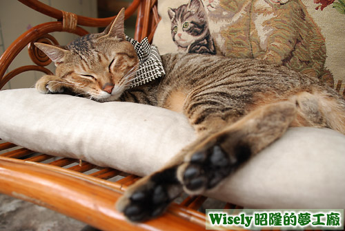Noo睡在搖椅