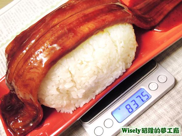 巨大蒲燒鰻魚握壽司重量八百三十七點五公克