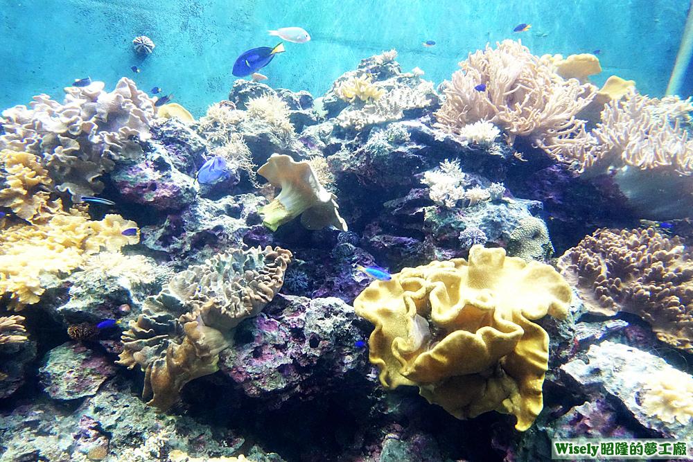 珊瑚王國館的魚群