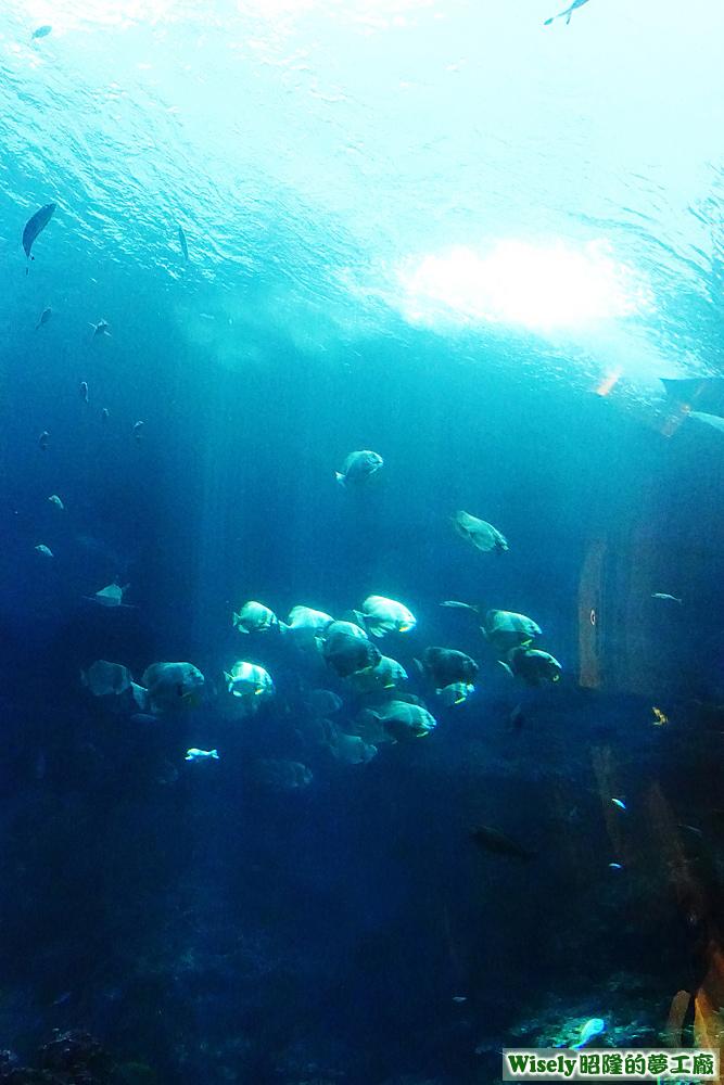 珊瑚王國館的生態