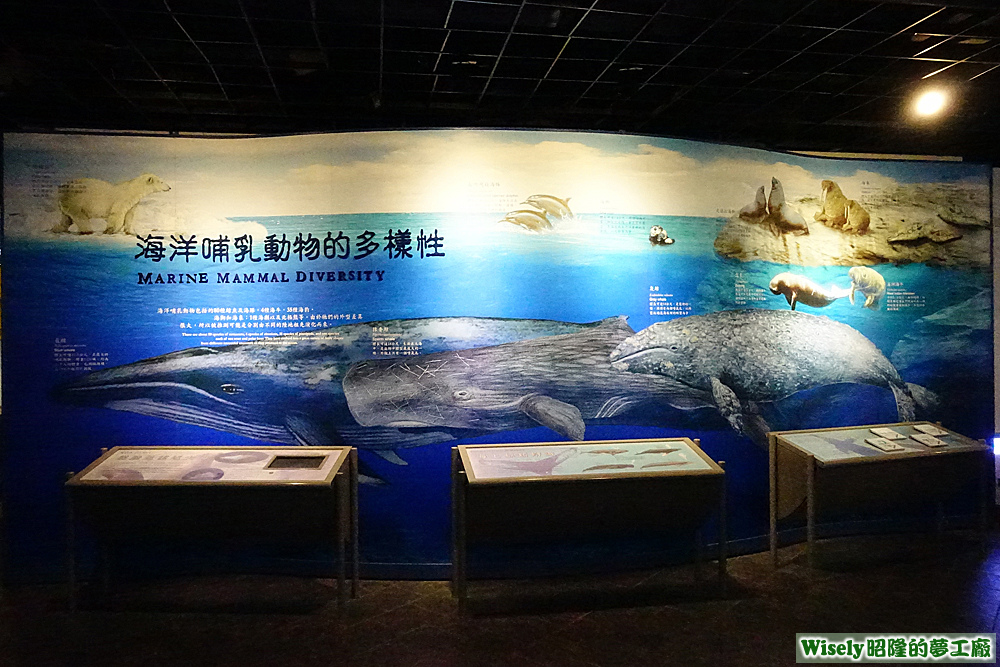海洋哺乳動物的多樣性