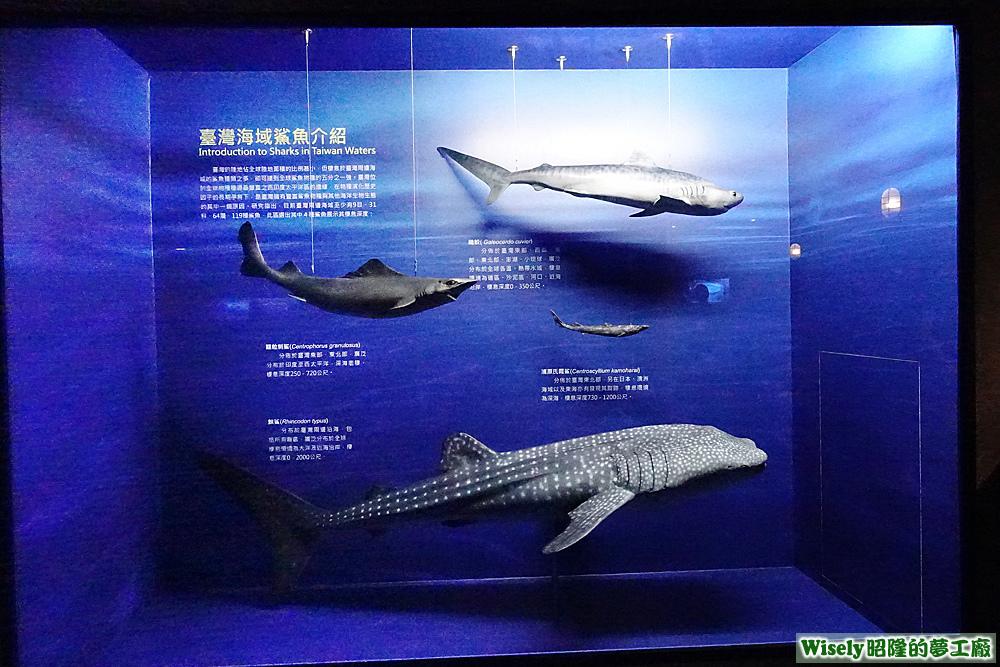 台灣海域鯊魚介紹