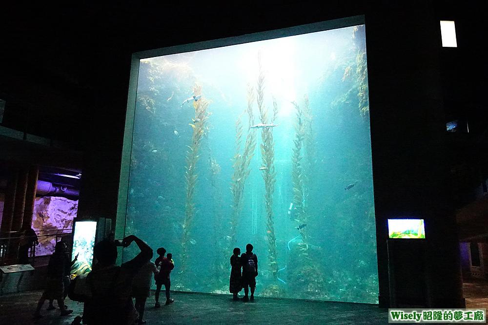 巨大海藻林
