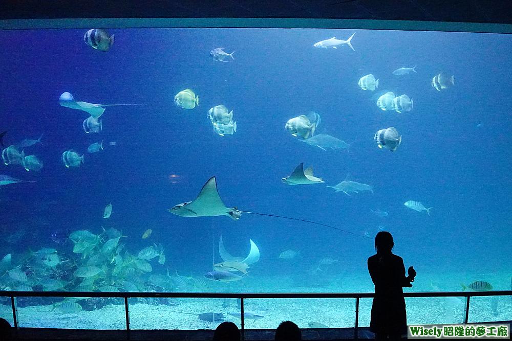 海洋生態池
