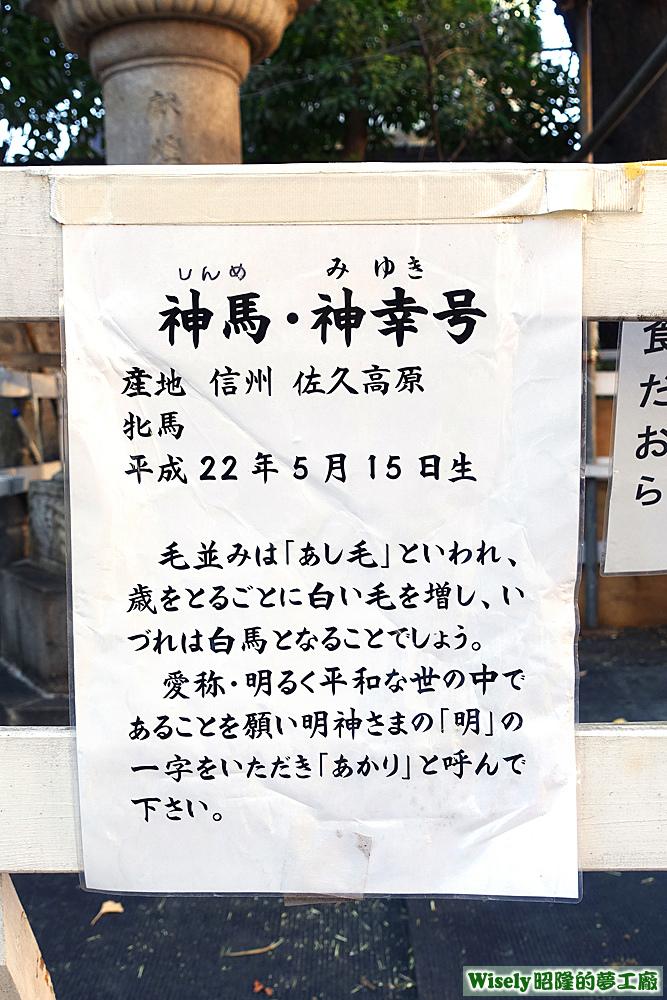 神馬・神幸号介紹
