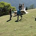 青青草園綿羊區-拍婚紗