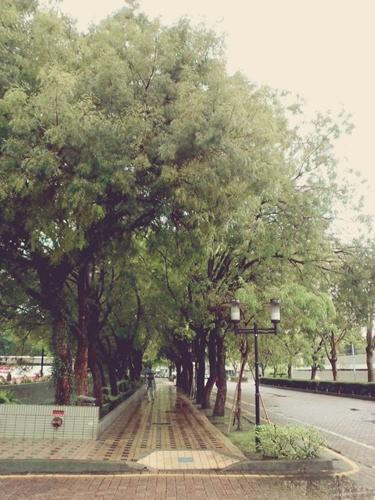 植物園在台中科博館後方
