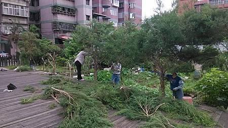 女巫藥草園茶樹收割