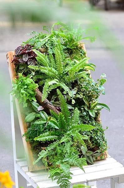 春天來種蕨色風情框