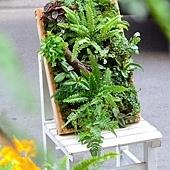 春天來種蕨色風情框2