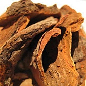 sassafras whole root bark.jpg