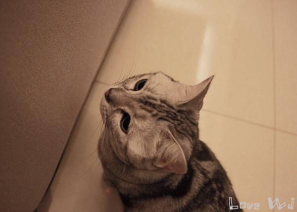 13.11.02 CAT17