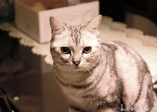 13.11.02 CAT01