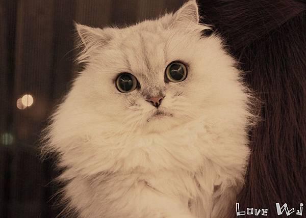 13.11.02 CAT02