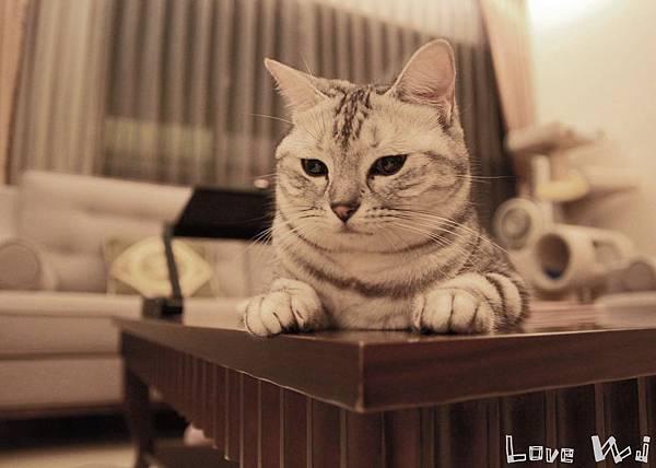 13.11.02 CAT07