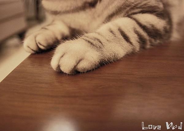 13.11.02 CAT08