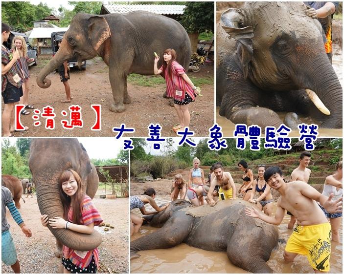 泰國清邁大象洗澡
