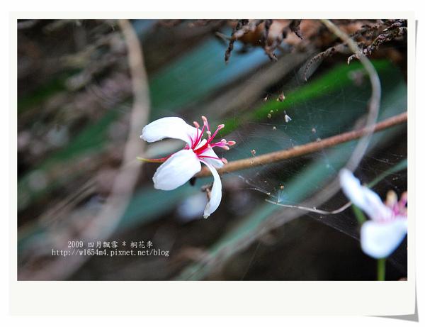 DSC_9219_nEO_IMG.jpg