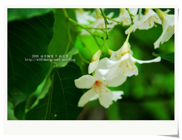 DSC_9363_nEO_IMG.jpg