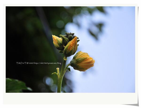 DSC_9886_nEO_IMG.jpg