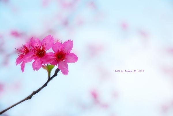 nEO_IMG_DSC_1234.jpg