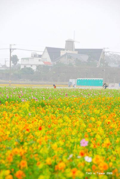 新社花海5.jpg