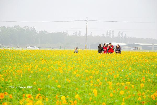 新社花海6.jpg