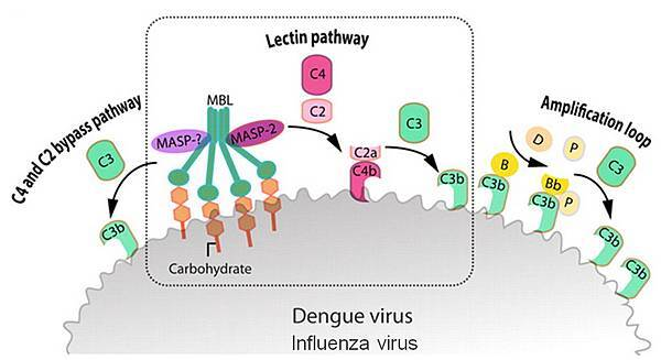 c3b virus