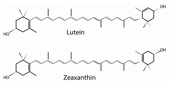 nutrients-05-01823-g002-1024 (1)