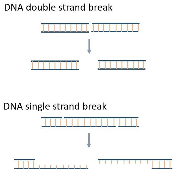 Simple strand break